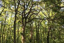 Chêne / Le chêne est un bois solide, dur et élastique. Il permet une combustion lente avec peu de fumée et une flamme chaude. Nous vous recommandons de stockage du chêne pour sécher un peu plus et évacuer ses tanins. Le chêne sec donne des flammes vives à crépitement.