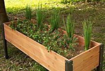 Plant en Tuin