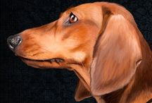 Doxies / by Lois Sauer