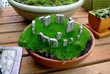 Miniature Gardens & Terrariums
