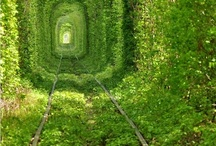 The Way of the Fae / Where faeries dwell, portals to Narnia, and other whimsical sites.