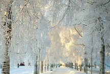 winter / by Lisa Hager
