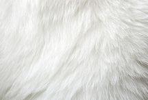 Fur. / by Cynthy Gwebu