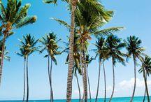 Palms. / by Cynthy Gwebu