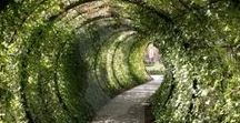 Tunnel of Love / Magical images