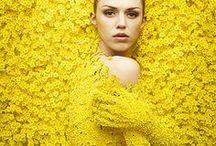 Flower inspiration, Biancospino