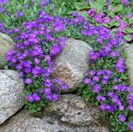 Kivipuutarha Rock garden