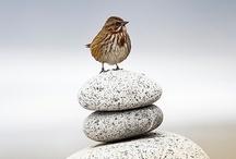 Birdie Obsession / by Francie Ryder