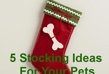 ..Awesome Pet Products.. / Product reviews, product guides and product recommendations for all the things you need for your dog, cat, fish, bird or other pets.