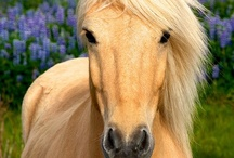 ..Horse Lover Eye Candy.. / For horse and pony lovers...all things horse. / by PetsLady