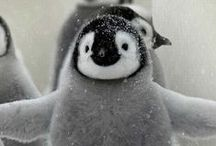 ..Penguin Lovers Eye Candy.. / by PetsLady