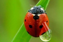 ..Ladybug Lovers Eye Candy.. / by PetsLady