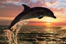 ..Dolphin Lovers Eye Candy.. / by PetsLady