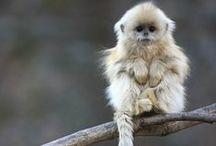 ..Monkey Lovers Eye Candy..