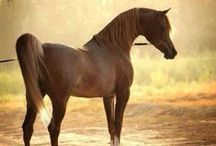 Equine <3