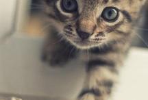 Miau Miau.... / by Thaby Kuri