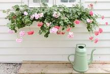 Garden inspiration / garden inspiration
