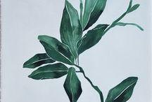 || Botany || / by Emma Holden