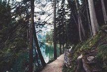 Erdő, táj, természet