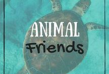 Animal Friends / Cute Animals :)