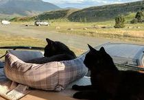 Adventure Cats & RV Cats / Traveling Cats, RV Cats & Adventure Cats
