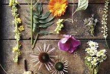 Green Thumb / Ideas for all you gardeners out there / by Liz Wade