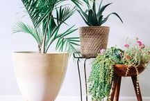 Plants for Home Decor / Indoor plants, particularly succulents are really hot right now, and there are so many creative ways to make them part of your home decor.