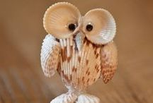 Shell Art / Things you can make with shells
