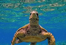 Turtle / Paint / Art