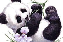 Panda / Paint / Art