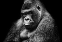 Gorilla / Paint / Art