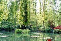 gardens: french / Giverny; Villandry; Marqueyssac / by Chantel Roux