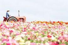 Flowers / by Youko Sano