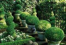 Secret Garden / Landscaping designs and other gardening tips.