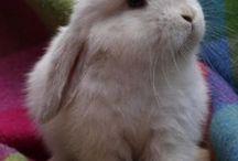 Cute bunnies / cute rabbits bunnies