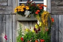 Glorious Gardens / Gardens are Peaceful and Fun / by Craig 'N'Ronnie Frazee