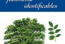 Árboles - Arbustos -  Libros Naturaleza / Libros sobre Árboles, Arbustos y Cultivos - Central Librera c. Dolores 2 Ferrol Tfno 981 352 719 Móvil 638 593 980