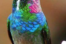 Aves maravillosas