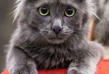 Katzen ~ Schmusebegleiter unserer Bauernhöfe / Was wäre ein Bauernhof ohne Katzen?