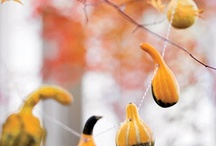 Fall/Thanksgiving / by Sheri Nelson