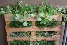 My future garden.... / by Jo Kurth