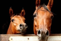 Horses Horses Horses / Well, this one is a no brainer: Anything and Everything relating to God's incredible creature, the Horse!! / by Trish Robinson