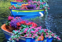 Container Gardening / Anything and Everything to do with Container Gardening!!! Ideas, designs, plants, containers, etc / by Trish Robinson