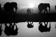 Afrika / ráj a peklo zvířat