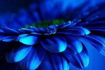 Blue-Modrá krása