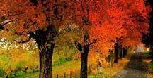 Autumn-podzim