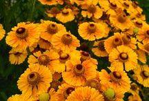 kwiaty / flowers / rośliny ozdobne / ornamental plants