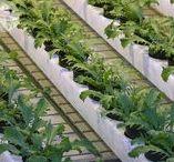warzywa / wegetables