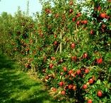 sady / orchards / sadownictwo / orcharding