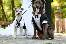 Puppy LOVE / If your dog really is your man's best friend, don't be shy to include him in your wedding!!